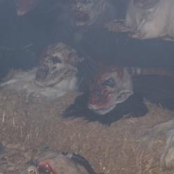 Maskenaustellungen in der Stmk und Hallein